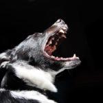猪狩り用の猟犬逃げ出し小学生女児3人襲う1人は右足と両腕嚙まれ重症