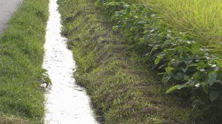 【栃木・真岡】用水路事故・5歳男児死亡/家族と用水路近くの畑に